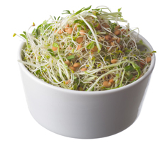Gourmet Sprouts