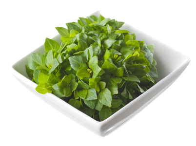 Basil (Greek)